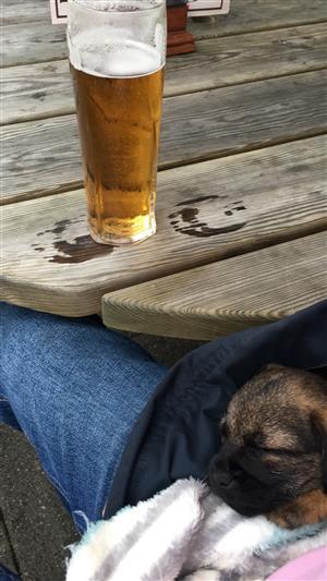 Pub Trip